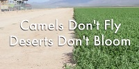 Camels Don't Fly, Deserts Don't Bloom