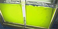ASU's Laboratory for Algae Research
