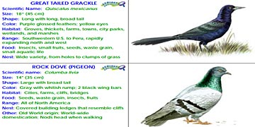 Bird Identification Cards