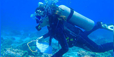Diver with net in ocean taking samples