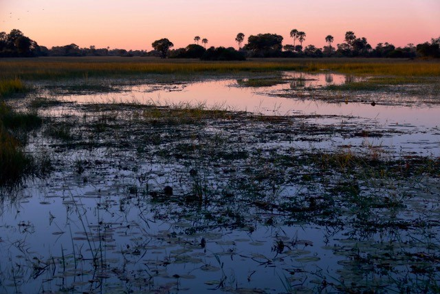 Picture of a freshwater marsh in Botswana