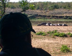 South Africa_Hippos small