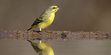 The Canary in our Global Environment