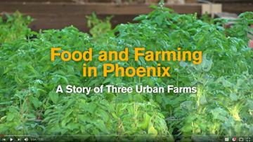 Food and Farming in Phoenix: A Story of Three Urban Farms