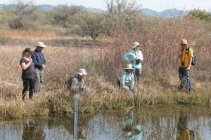Field trip participants at the St David Cienega, west side of San Pedro River, Arizona