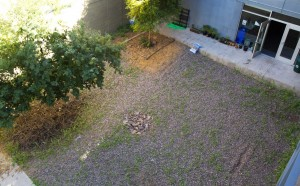 The courtyard prior to the undertaking: not much more than a rock bed