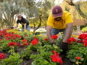 Men tending to a flower bed at ASU