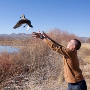 Man wearing brown shirt stands in front of a pond and releases a duck into the air.