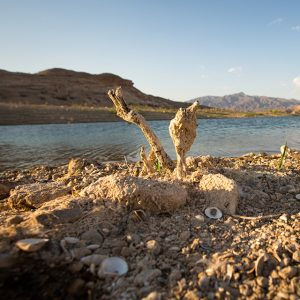 Receding water reveals the decay on the lake bed of Lake Mead