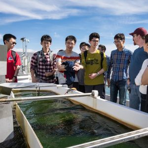 Visiting Chinese students gather around an outdoor algae bed