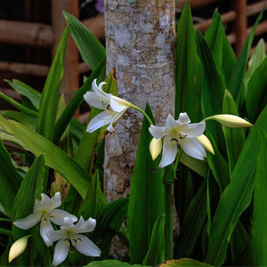 Close up of tropical Ecuadorian Amazon orchids against other local vegetation